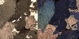Hornblende (thin section)