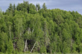 Boreal Forest at Long Lake-2