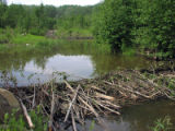 Beaver Dam on Muskeg Creek - landscape