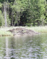 Beaver Lodge on a Lake