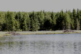Beaver Lodges on a Lake