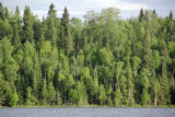 Mixed Wood Boreal Forest